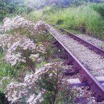 As Ferrovias e a Natureza